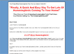 Hummingbird Secrets Revealed!