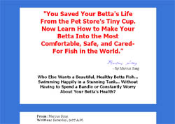 Caring For Betta Fish: An Insider's Guide For Betta Lovers