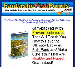 Fantastic Fish Ponds - How to Make Sure Your Fish Are Livin' The Good Life