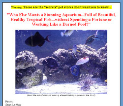 Tropical Fish Secrets